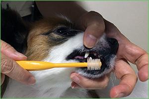 前歯の歯磨きをしているところ