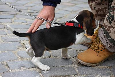 飼い主に甘える子犬の写真