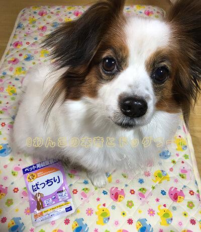 愛犬とDHCのサプリメントぱっちりの写真