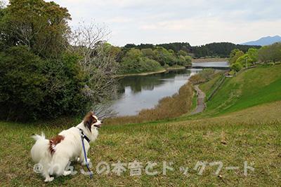 蚊・ダニ・ノミなどが居そうな自然豊富な犬の散歩コースの写真