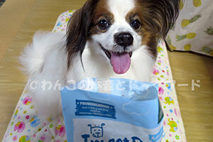 インセクトドッグを試食しようとする愛犬の写真